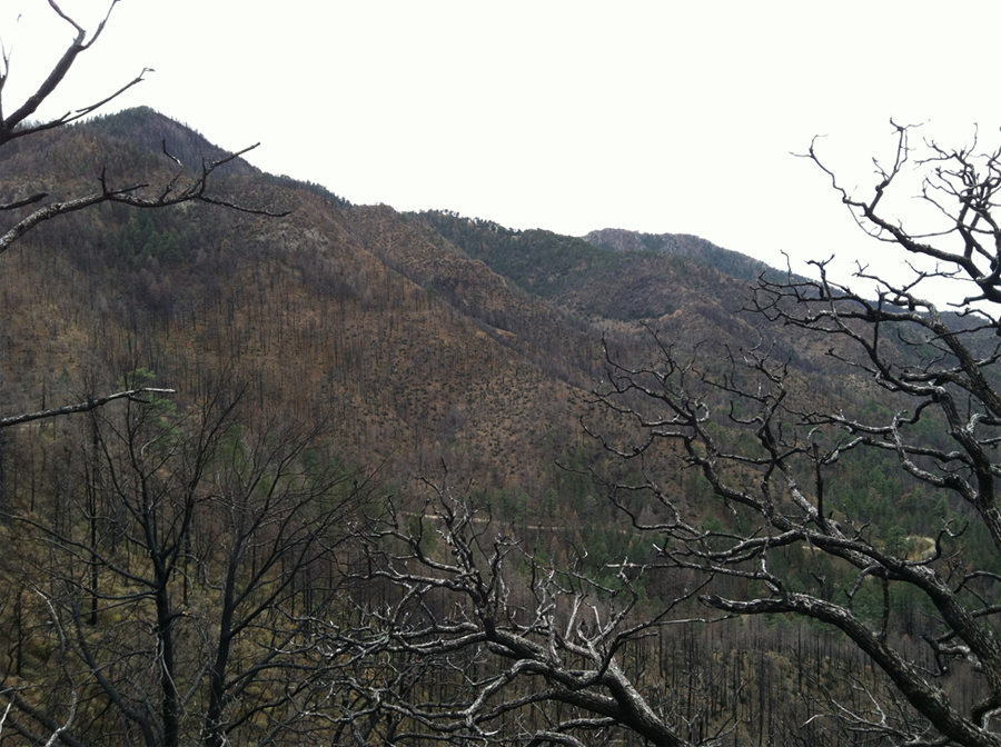 Figure 1: Post-Horseshoe 2 Fire burned area of Chiricahua Mountains (Arechederra-Romero 2012).