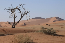 sandstone, dunes, aeolian processes, geomorphology