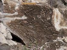 tectonite, core complex, detachment fault, Basin and Range Province
