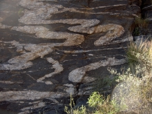 Santa Catalina Mountains forerange ptygmatic folds in the pegmatitic gneiss